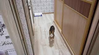 когда у кота нет клички!