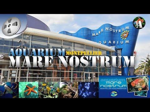 l aquarium marenostrum montpellier 34 visite et reportage