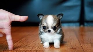 Cute is Not Enough - Funny Cats and Dogs Compilation #240