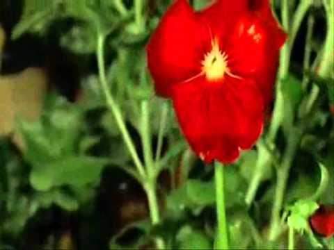 Yanni Voices - Omaggio {tribute}.