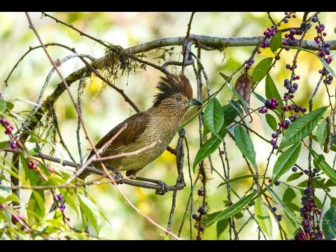 Birding trip to Sonajuli, Arunachal Pradesh