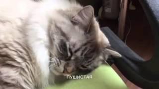 Самая няшная кошка