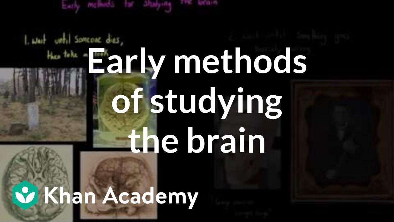 Early methods of studying the brain organ systems mcat khan early methods of studying the brain organ systems mcat khan academy ccuart Image collections