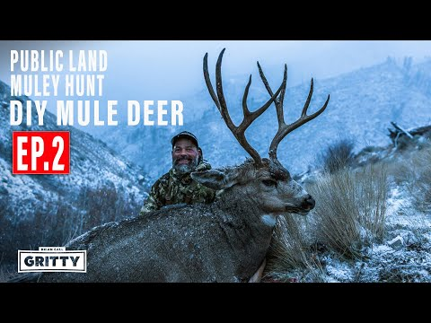 BIG BUCK OASIS | PUBLIC LAND MULE DEER HUNT