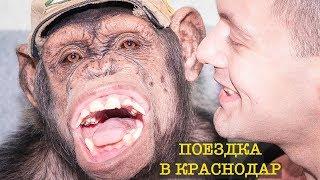 Дан Запашный перевозит Цирковых животных, обезьян Шимпанзе!!!