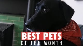 Best Pets of the Month | October 2018