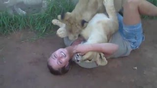funny animals.  two young lions and one girl.