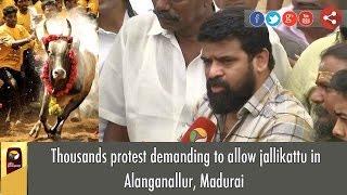 Hiphop Tamizha with Thousands Protest demanding to allow jallikattu in Alanganallur, Madurai