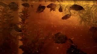 Купить рыбок для аквариума. Малави. 8-905-546-66-92