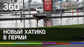 Русский Хатико ждёт хозяина в Перми каждый день