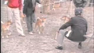 平成元年10月22日撮影 ラストの幼犬雄は院の柳鉄王号-大分芳豊荘.