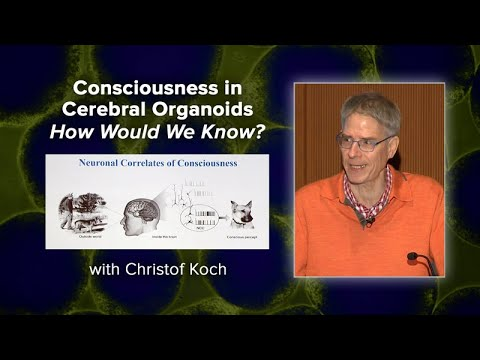 Consciousness in Cerebral Organoids - How Would We Know? with Christof Koch