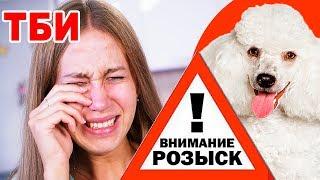 ОНИ ПОХИТИЛИ МОЮ СОБАКУ! ТБИ - 10 серия