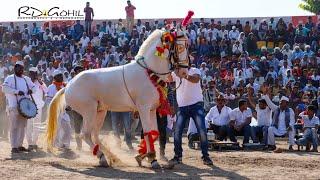 घोड़ी डांस p(4)Indian Horse Dance  Chetak Festival Sarangkheda 2018