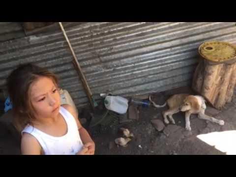 Gente humilde en sonsonate El Salvador gallina teniendo pollitos