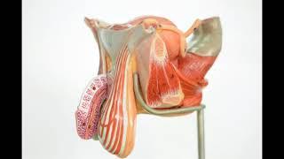 Prostat Kanseri - Robotik Cerrahi | Tibeterdogru.com