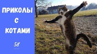 Смешные КОТЫ КОТИКИ КОТЯТА Приколы с животными 58