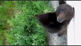 Russian bear Медведев держитесь .Новая песня Слепакова Просто денег нет  2016