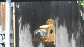 Squirrel Under Glass Part 2