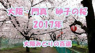 大阪・門真 砂子水路の桜 2017年 Cherry trees of Sunago Kadoma Osaka (2017.4)