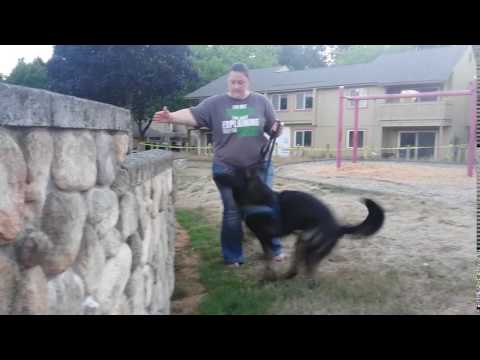 Parkour dog novice blooper