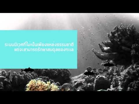 """"""" ปัญหาระบบนิเวศปะการัง """" bio-save the coral reef  หัวข้อสู่วิทยานิพนธ์  thesis 2013"""