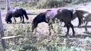 Petit poney - Dieudonné (Officiel video clip)