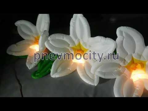 фото цветы лилии белые