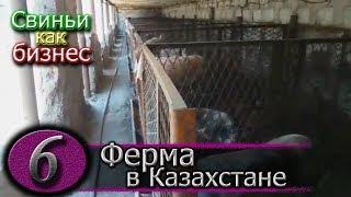 видео: СВИНОФЕРМА НА ПОДСТИЛКЕ В КАЗАХСТАНЕ