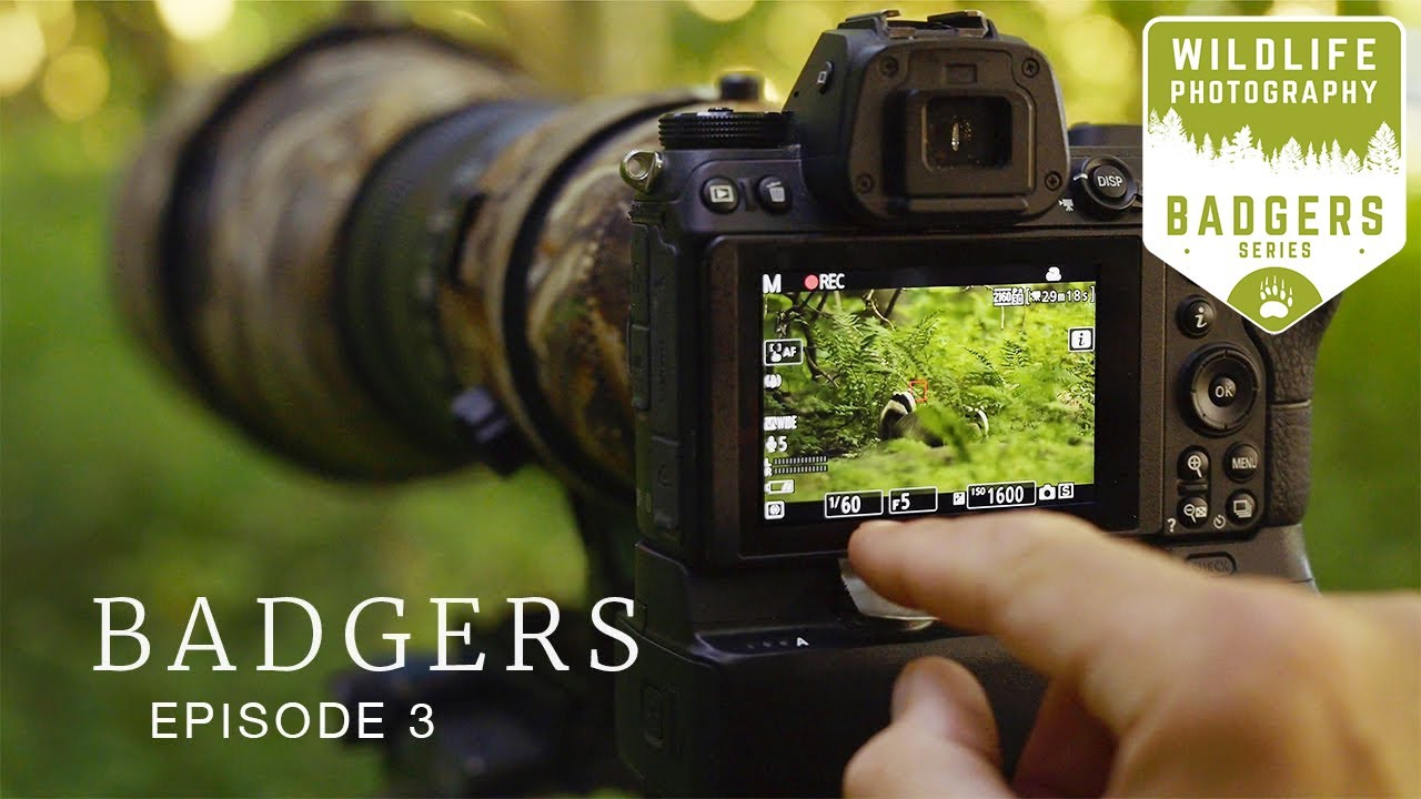 THIS IS WHY I DO WILDLIFE PHOTOGRAPHY - Badgers Ep3   woodland photography, camouflage, nikon z6
