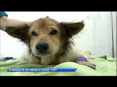 Cadela é resgatada de esgoto por moradores de bairro