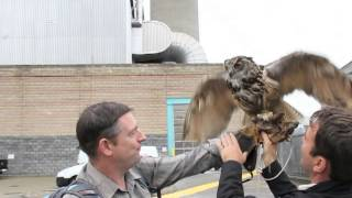 Open House - Birds of Prey at SELCHP Sep 13