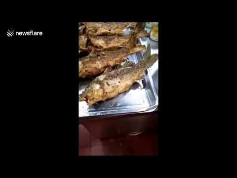 Pescado frito todavía se mueve en el plato.,.....