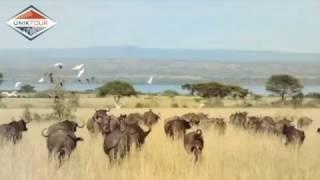 Uniktour - Voyage Ouganda 2015
