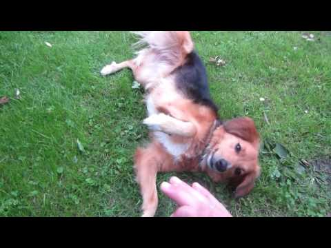TEACH YOUR DOG TO PLAY 'DEAD'! - EASY to LEARN!!