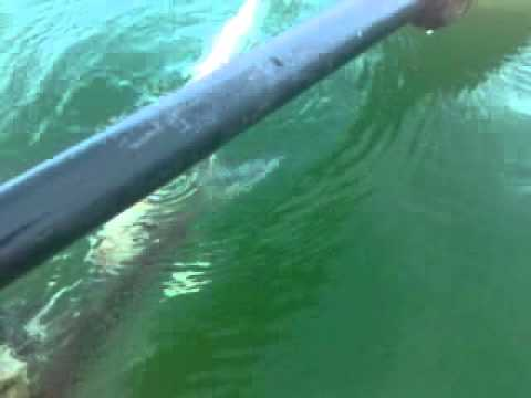 Lake mead fishing report 2019