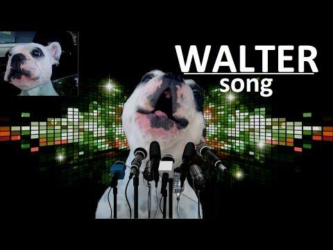 D&M  Hilarious Dog (Веселая собака) [ft. Walter (Уолтер)]