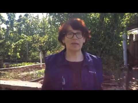 видео: ПОСАДКА ПОМИДОР| Органическое земледелие
