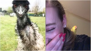 Didn't think BIRDS COULD BE FUNNIER than cats? Then watch this!  Funny ANIMAL Compilation