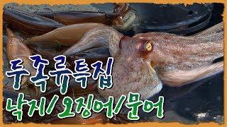 연체동물 두족류특집-낙지/오징어/문어 [어영차바다야 다시보기]