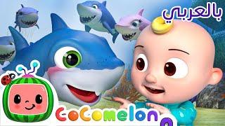 Cocomelon Arabic | أغاني كوكو ميلون بالعربي |اغاني اطفال ورسوم متحركة| أغنية صغير القرش - بيبي شارك