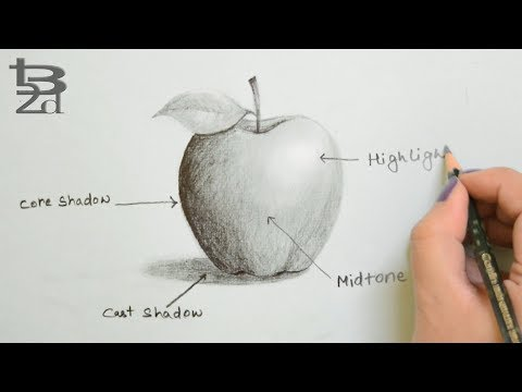 Draw Apple with Pencil | How to do Shading | Learn Light and Shadow