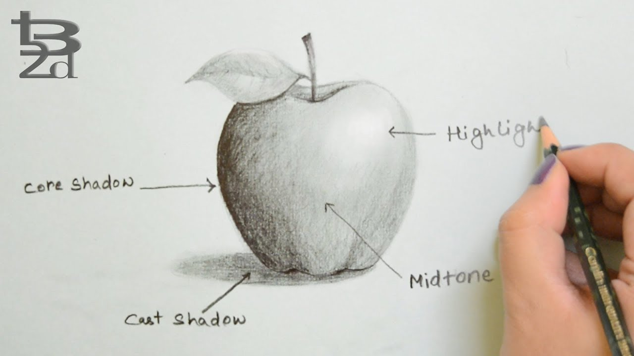 Draw apple with pencil how to do shading learn light and shadow