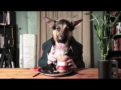 Cane educato che mangia come una persona youtube - Cane che mangia a tavola ...