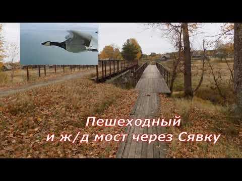 Посёлок Сява. Прогулка в леспромхоз. (Октябрь 2018 г.)