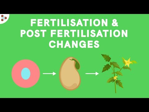 Fertilisation And Post-fertilisation Changes