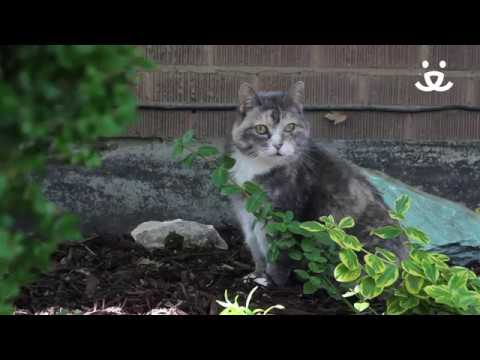 How To Keep Cats Off My Yard And Out Of My Garden - Best Friends Animal Society