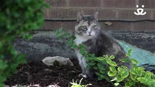 How to keep cąts off my yard and out of my garden - Best Friends Animal Society