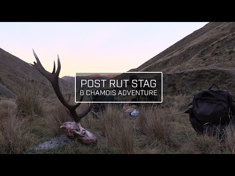 POST RUT STAG & CHAMOIS HUNTING - NEW ZEALAND