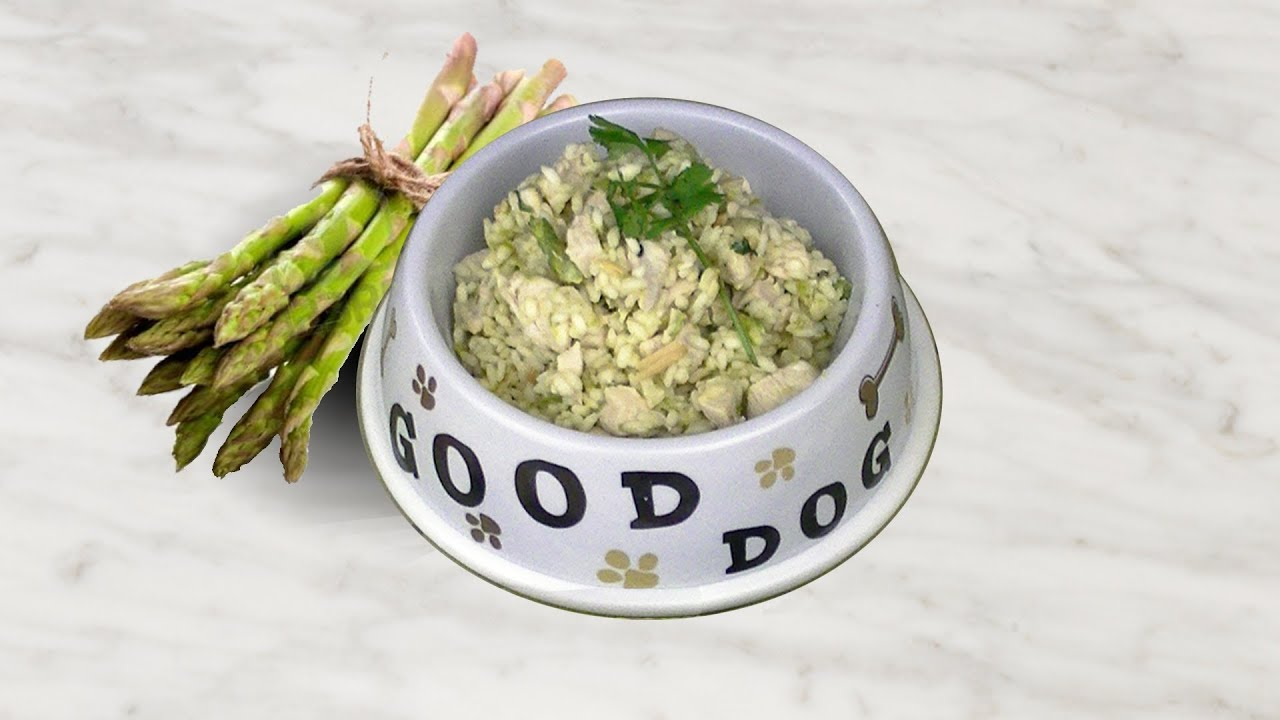 Chicken rice dinner with fluffy rice asparagus diy dog food by chicken rice dinner with fluffy rice asparagus diy dog food by cooking for dog forumfinder